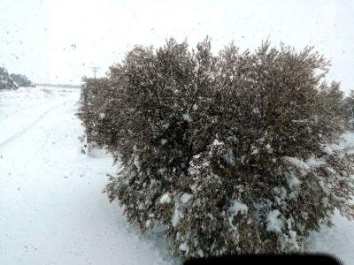 Preocupación en el campo por el efecto de la nieve y las heladas