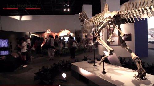 Los dinosaurios de Cuenca que se exhiben en Japón viajan a Osaka, desde Fukui