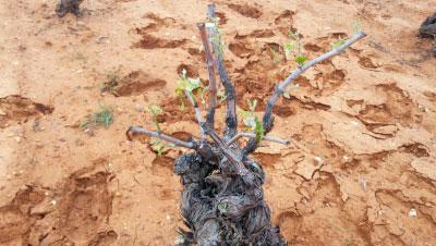 Una tromba de agua y granizo daña 500 hectáreas de cultivo entre Graja y Minglanilla