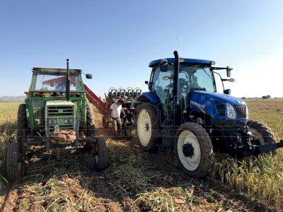 El sector del ajo, expectante ante los precios y la meteorología