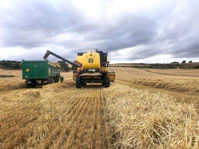 """Precios """"aceptables"""" en el inicio de la cosecha del cereal"""