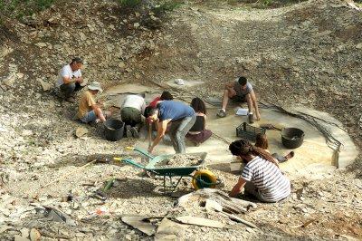 Tras las huellas de un dinosaurio bípedo, cojo y de tres metros en Las Hoyas