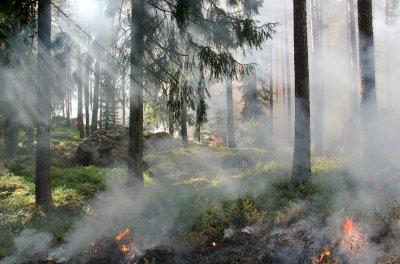 Precaución ante el riesgo alto y muy alto de propagación de incendios