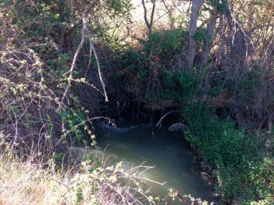 Cs pide que se depuren las aguas residuales de las pedanías