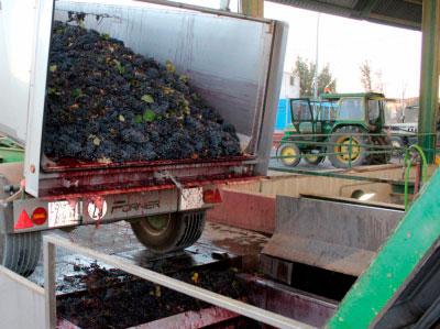 Denuncian presunta estafa en la venta de uva con afectados en varias provincias de la región