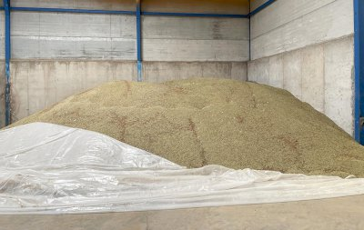 La cosecha de lenteja en la provincia, un 40% por debajo de las previsiones