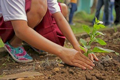 Tarancón plantará 20 árboles por cada uno talado para cumplir normativa europea
