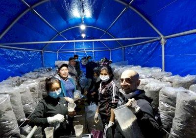 Éxito del proyecto piloto de Adimán para el cultivo de champiñón en Bolivia