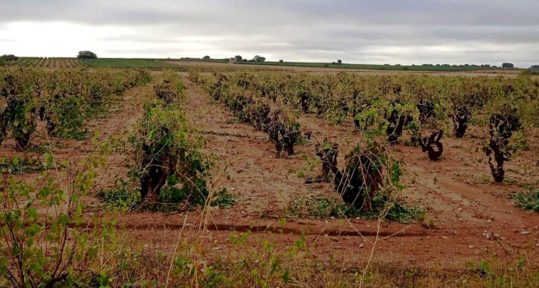 Daños en el campo de La Manchuela conquense tras el paso de la DANA