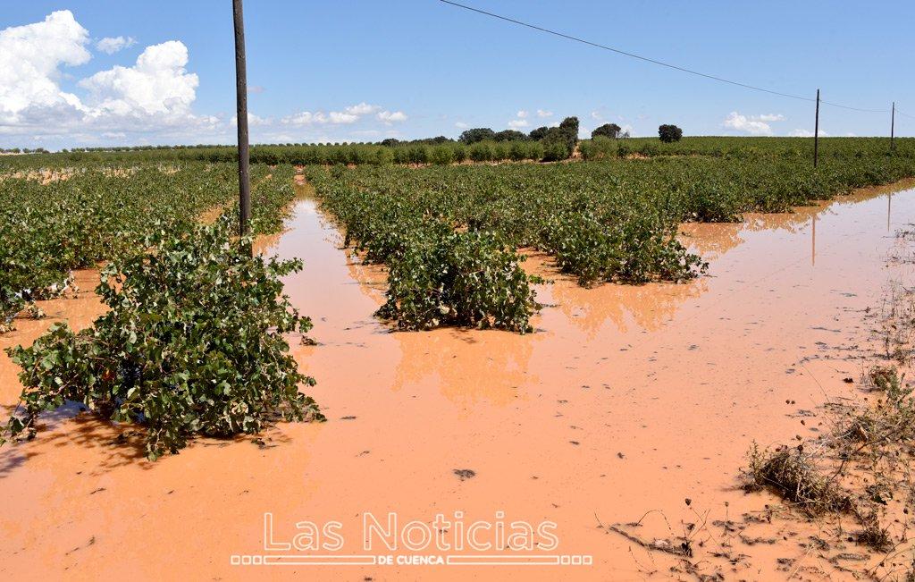 La Junta cifra en 5.550 las hectáreas de cultivo dañadas en Cuenca por la DANA
