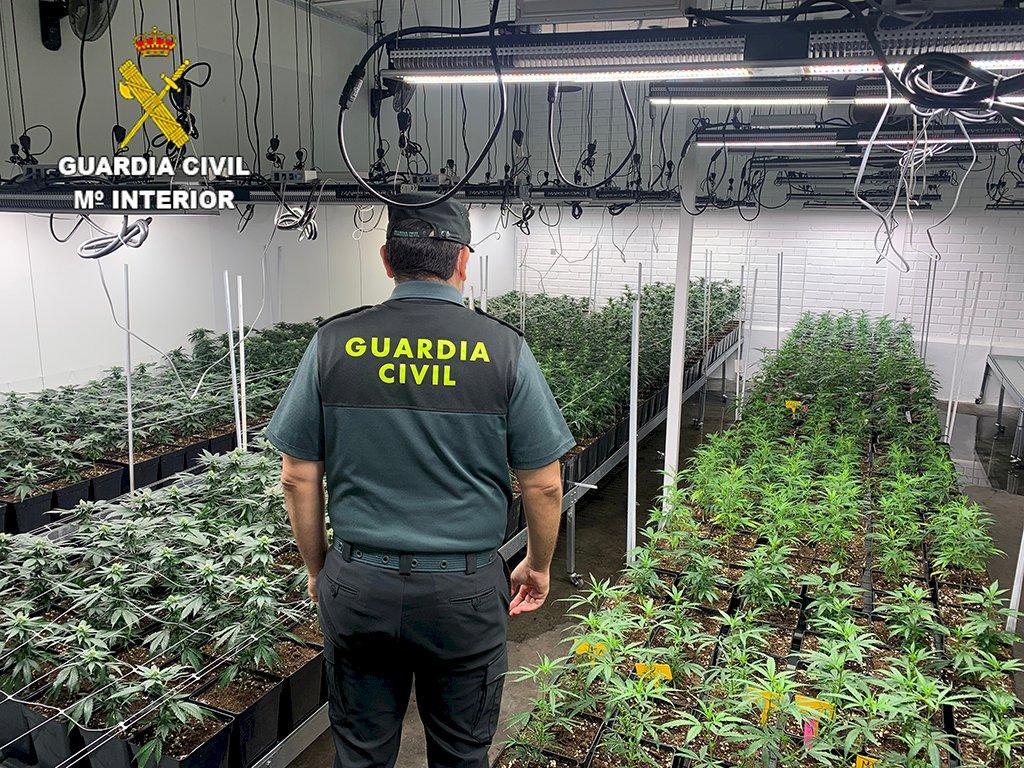 Localizada en Cuenca una nave con más de 1.400 plantas de marihuana