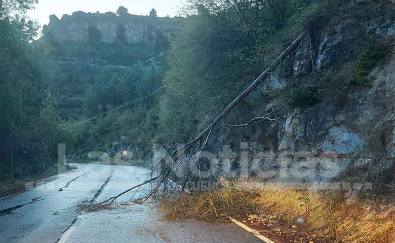 Arbol caído poco antes del kilómetro 5 de la carretera de Palomera.