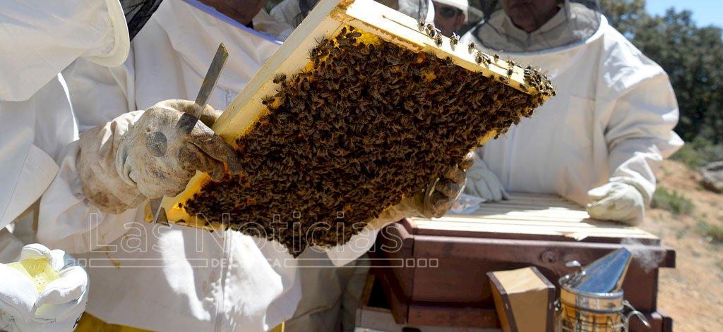 La temporada de miel en la provincia concluye con un 35% más de producción