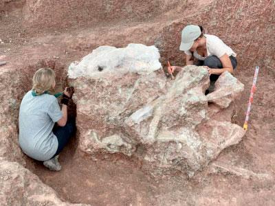 Cincuenta años de paleontología en Cuenca